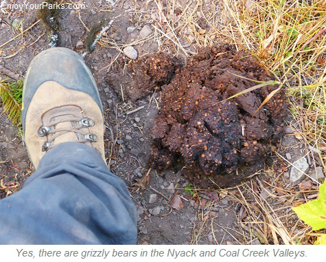 Grizzly bear scat, Nyack Coal Creek Loop, Glacier National Park