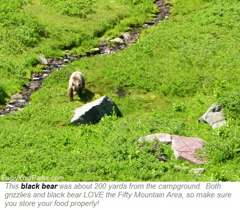 Black bear at Fifty Mountain, Glacier Park