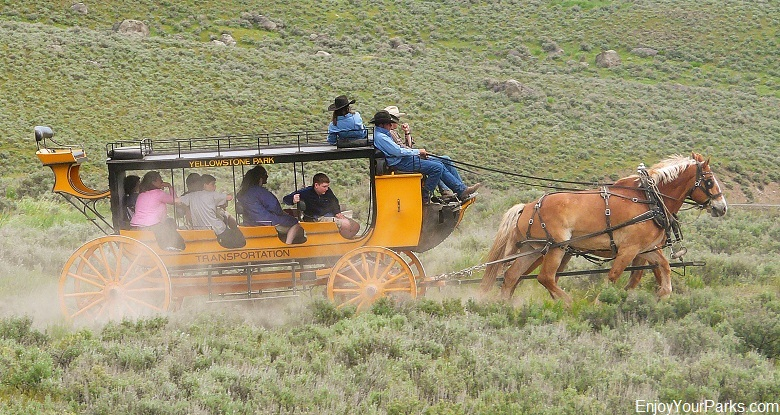 Roosevelt Lodge Stagecoach Ride, Yellowstone National Park