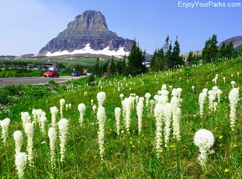 Beargrass, Logan Pass, Going To The Sun Road, Glacier National Park.