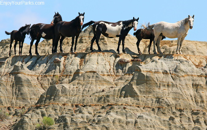 Wild Horses, Theodore Roosevelt National Park, North Dakota