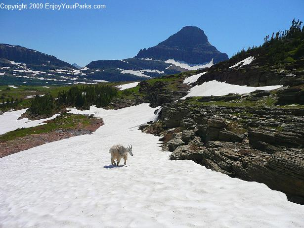 Mount Oberlin, Glacier National Park