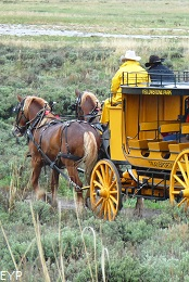 Stagecoach rides at Roosevelt Lodge, Tower / Roosevelt Area, Yellowstone National Park