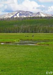 Norris Junction Area, Yellowstone National Park