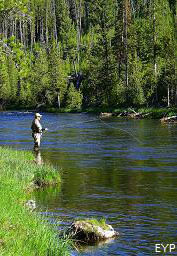 Fly Fisherman on the Firehole River, Madison Junction Area, Yellowstone National Park