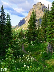 Two Medicine Pass Trail, Glacier National Park