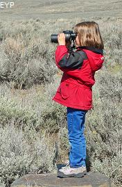 Wildlife viewer, Lamar Valley, Yellowstone National Park