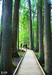 Trail of the Cedars, Lake McDonald Area, Glacier National Park