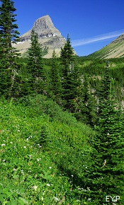 Stoney Indian Pass Trail, Glacier National Park