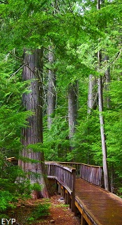Trail of the Cedars, Lake McDonald Lodge, Glacier National Park